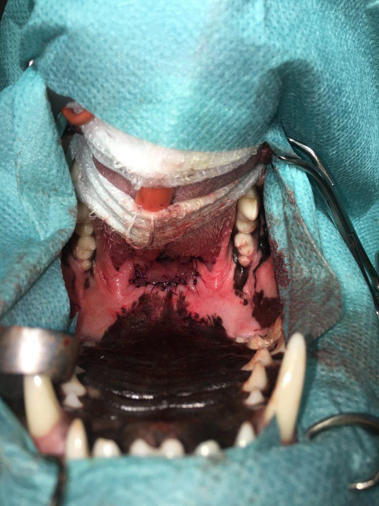 Weichteilchirurgie 3